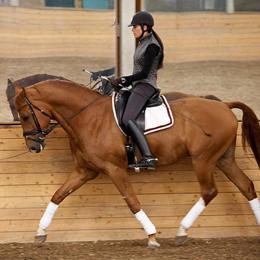 nicola-s-success-millionaires-horse